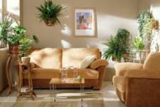 Особенности размещения растении в квартире