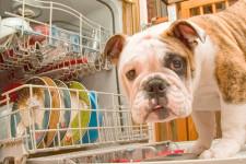 Посудомоечная машина: так ли убедительны причины ее приобретения?