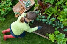 Мероприятия по подготовке огорода к условиям климата