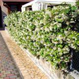 Забор из кустарников — делаем сами