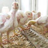 Птицеводу о главном. Термическая обработка корма