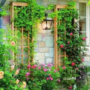 Как сделать «живые» стены домов и заборов