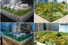 Сад на крыше: оригинальные способы озеленения крыш домо