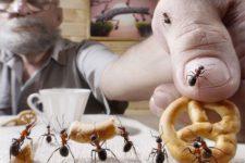 Как вывести муравьев из квартиры?