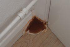 Как уничтожить домовой грибок?
