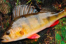 Как правильно ловить рыбу летом?