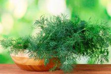 Выращивание петрушки и укропа с помощью семян