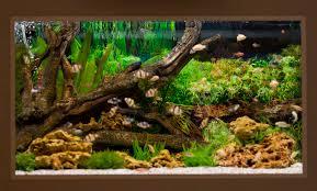 Собственный магазин аквариумов