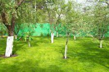 Расположение деревьев
