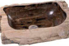 Раковины из Фоссильного (окаменелого) дерева