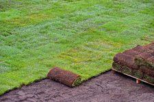 Газон: выбор семян, посев и уход