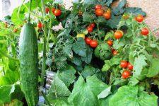 Выращивание овощей на садовом участке