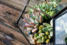 Флорариум: увлекательное хобби, красивый декор для дома, повод для гордости