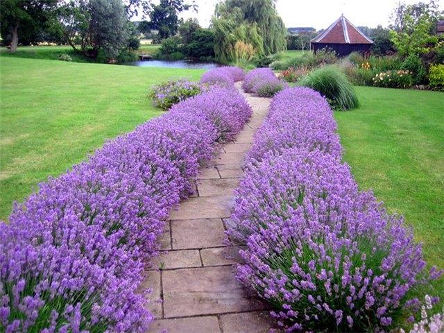 Дорожки — изюминка вашего сада