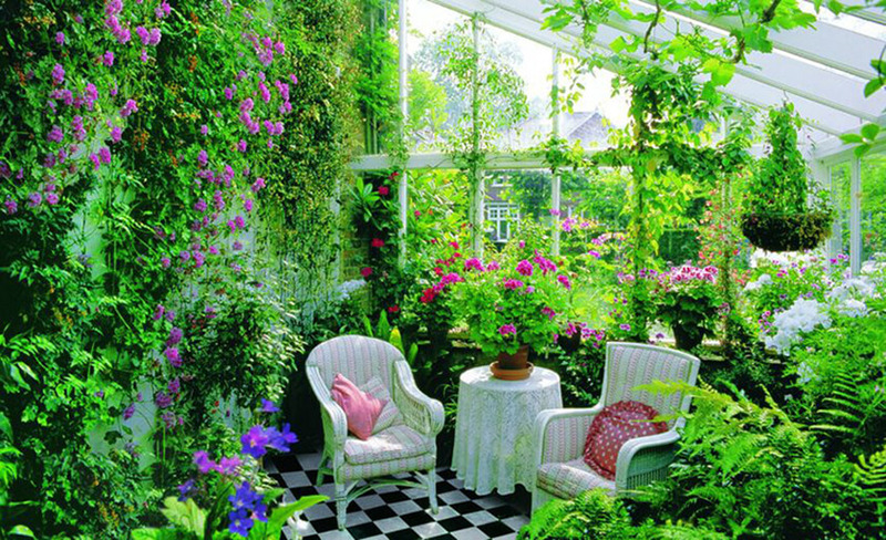 Растения в интерьере вашего дома