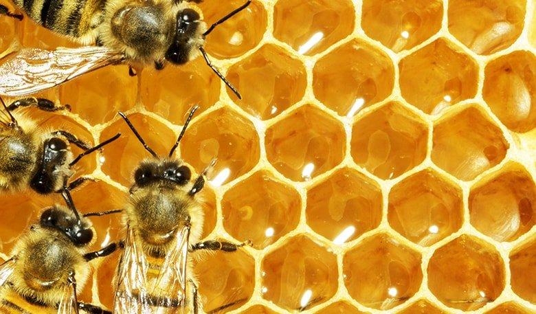 Как оставить пчёл зимовать под открытым небом