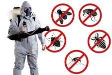 Уничтожение насекомых в СПб: дезинсекция и ее особенности