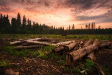 Окружающая среда и технологии — как современные решения помогают защитить природу?