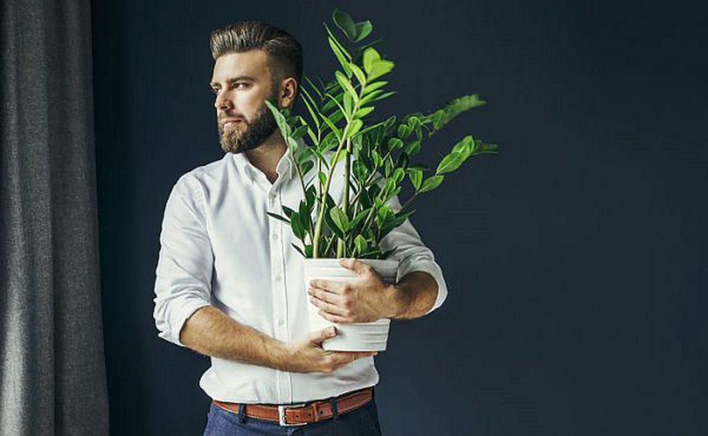 4 комнатных растений для холостяков