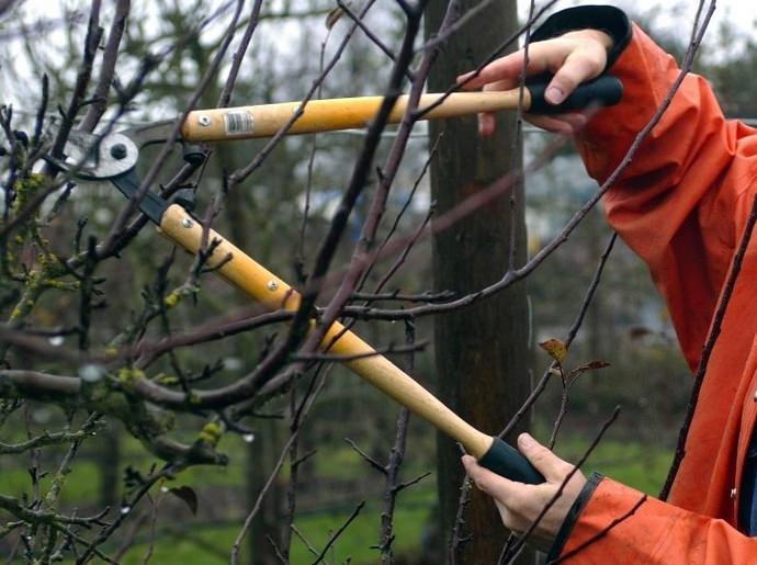 Осенняя обрезка в саду: правила и инструменты