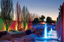Красота зимнего сада — деревья и кустарники