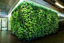 Фитостудия Листайм – компания-лидер в области озеленении