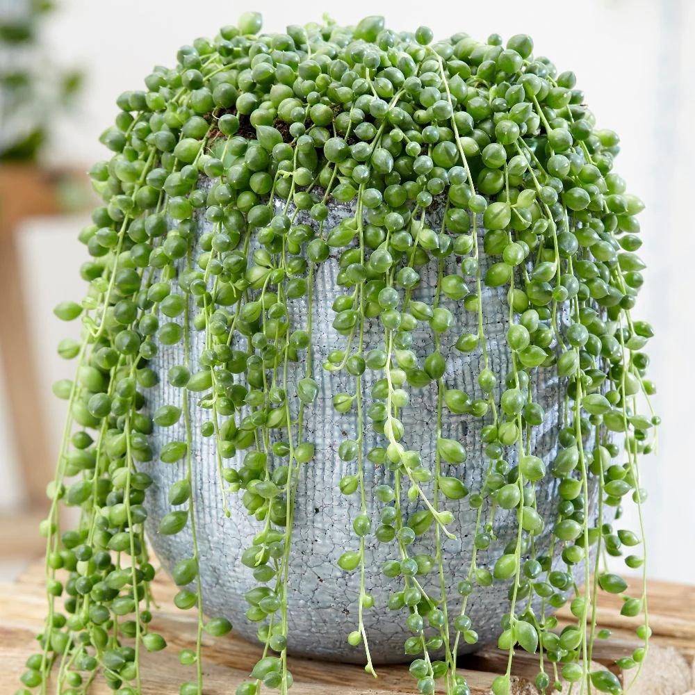 8 уникальных комнатных растений, о которых вы могли не знать
