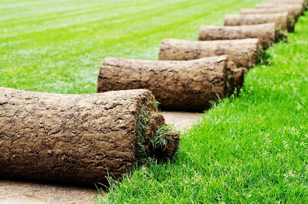 Рулонный газон — минусов больше, чем плюсов