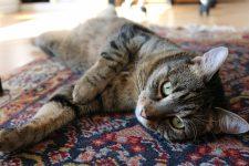 Давайте разбираться: как правильно постелить ковёр