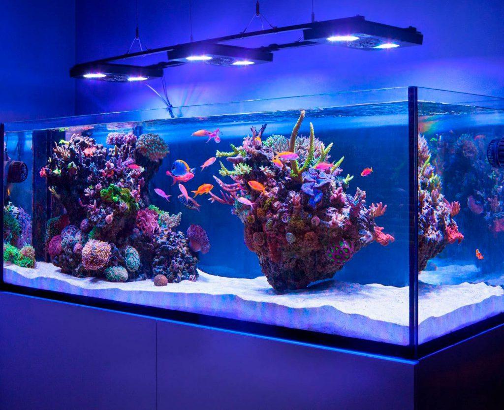 Как правильно выбрать аквариум?